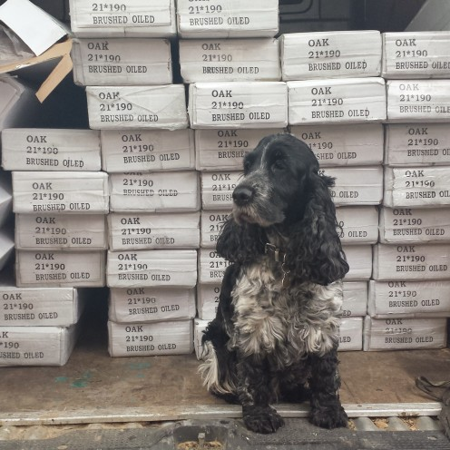 Lily the Spaniel, Nigel's some-time assistant at Floor & More.